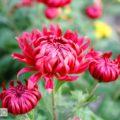 Фотографуємо квіти – публікація перша