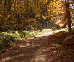 Осінні лісові пейзажі