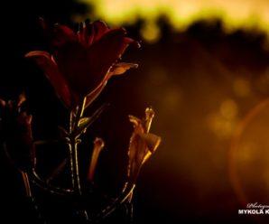 Історія одного кадру: «У світлі сонця що заходить»