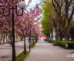 Фотопленер 1.0 Перший весняний фотосет 2020 і нові теми для проекту