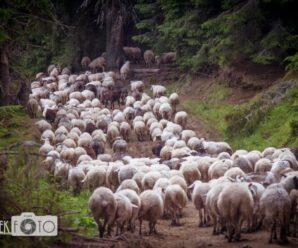 Спецнагорода у фотоконкурсі «Місце краси та сили: природні парки Карпат»